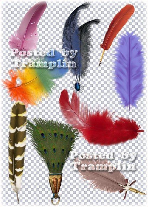 Клипарт в Png –  Разноцветные перья