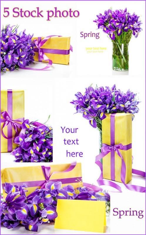 Ирисы, подарочная коробка и открытка на белом фоне - Растровый клипарт