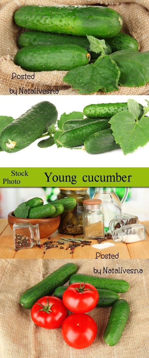 Молодые огурчики / Young cucumbers - Stock photo