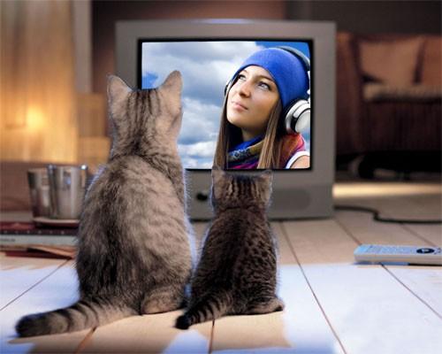 Рамка psd - Милые 2 кошки возле экрана