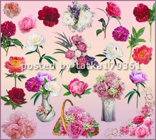 Цветочный клипарт для фотошопа - Яркие красочные пионы