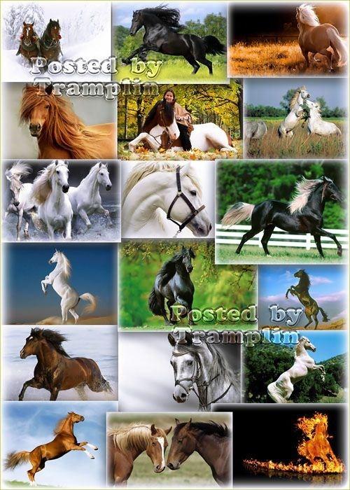 Фото клипарт – Лошади, символ 2014 года