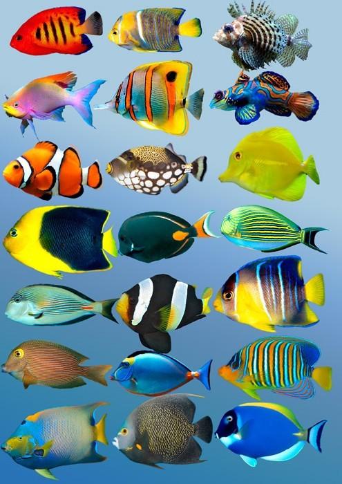 Нарисованный подводный мир