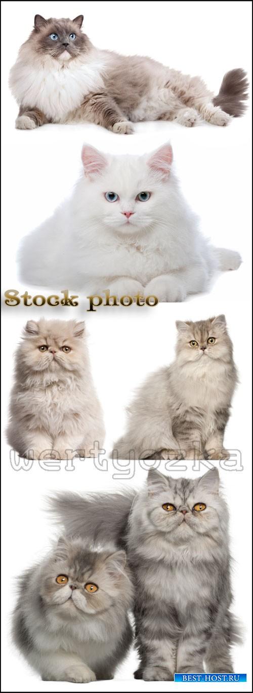 Кошки, пушистые любимцы / Cats, pets