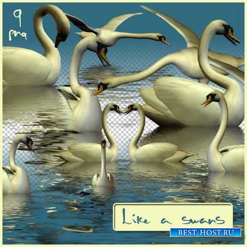 Романтический набор для скрапбукинга - Лебединая верность