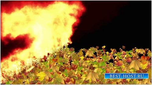 Футаж с альфаканалом - Горящие листья