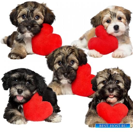 Клипарт - Щеночки с сердцами