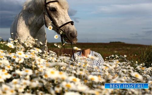 Шаблон psd женский - В поле ромашек с белым конем