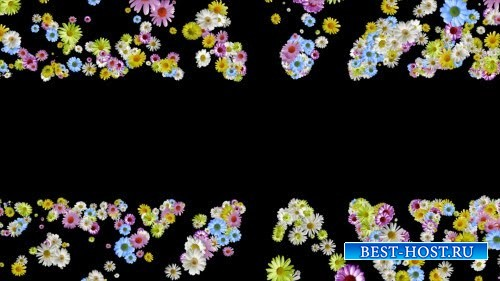 HD футаж Цветы для тебя
