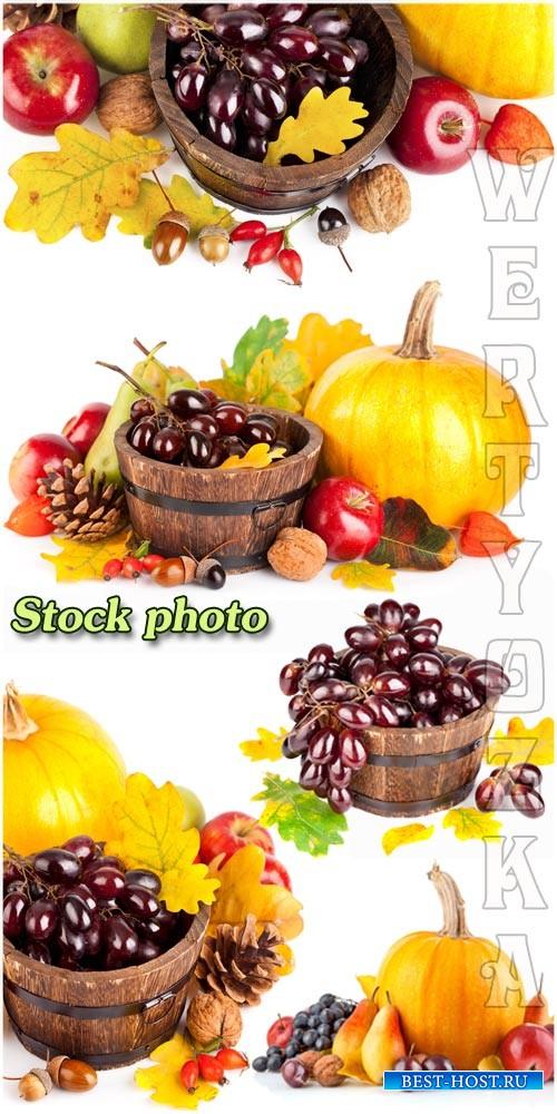 Осенний урожай, виноград, тыква, груши / Autumn harvest, grapes, pumpkins,  ...