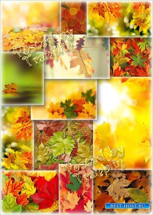 Супер-подборка фонов – Золотая Осень