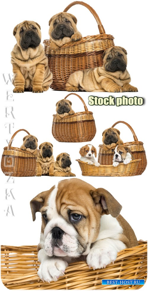 Забавные собачки в корзинах / Funny little dog in a basket - Raster clipart