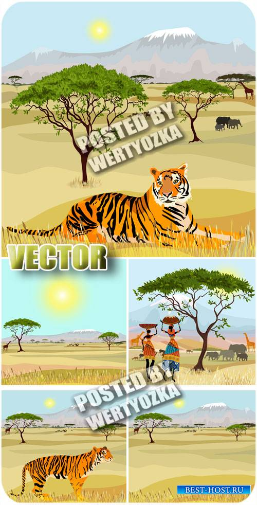 Африка, фоны с тигром / Africa , backgrounds with tiger - stock photos