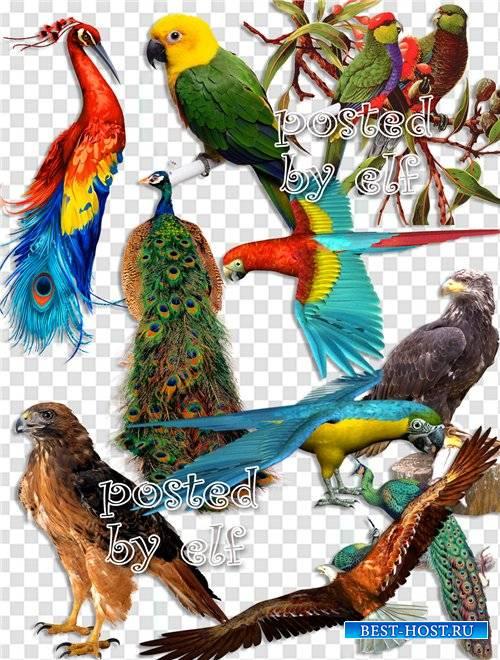 Павлины, орлы, попугаи на прозрачном фоне