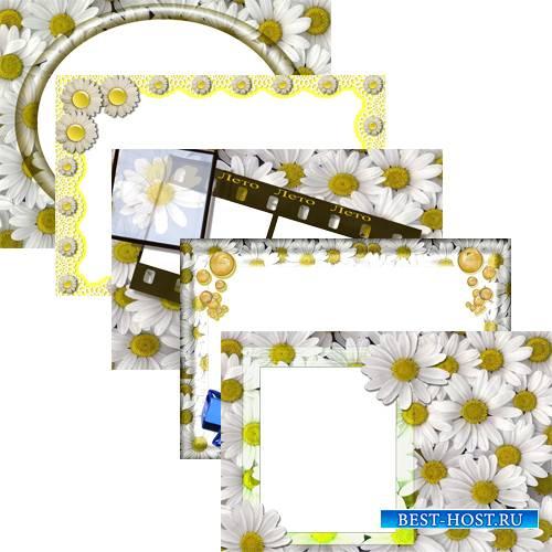 Цветочные фоторамки - Прекрасные ромашки