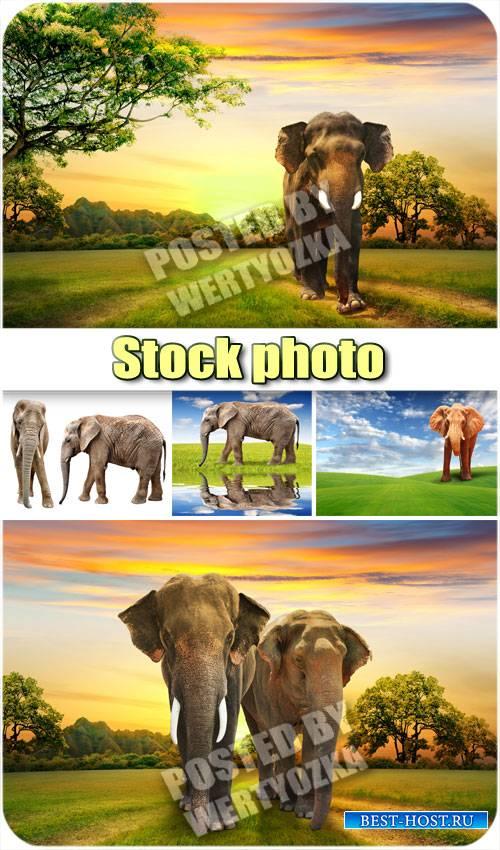 Слоны и чудесные пейзажи / Elephants and wonderful scenery - stock photos