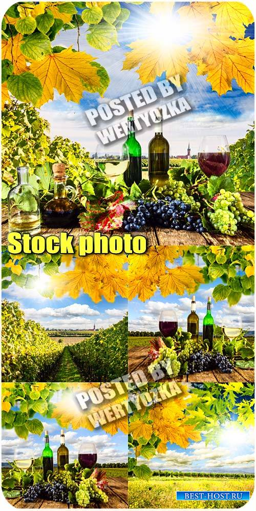 Вино, виноградники / Wine, vineyards - stock photos