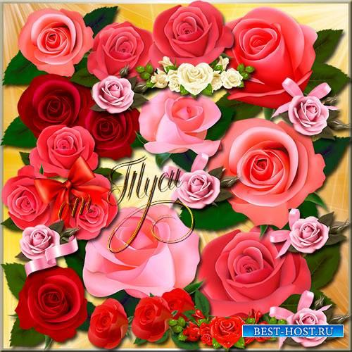 Клипарт - Нежная роза прекрасна всегда