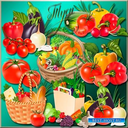 Клипарт - Много овощей даёт мой любимый огород