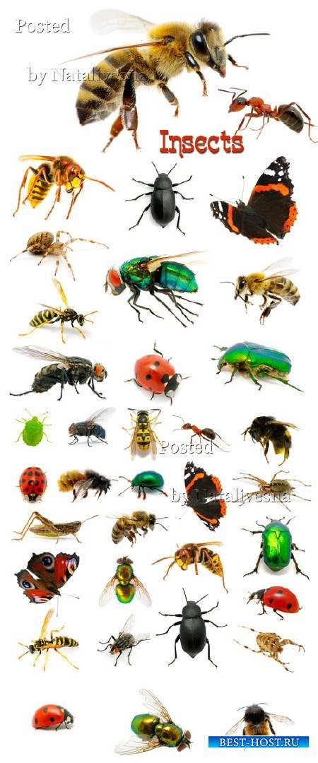Пчелы, осы, пауки, бабочки и мухи на белом фоне