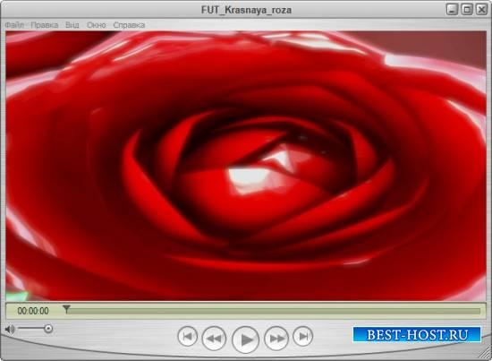 Романтический прекрасный футаж - Нежность розы