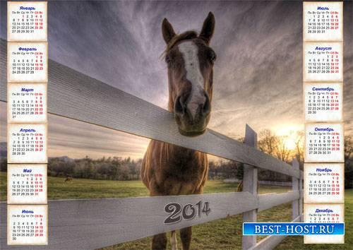 Настенный календарь - Лошадка в загоне