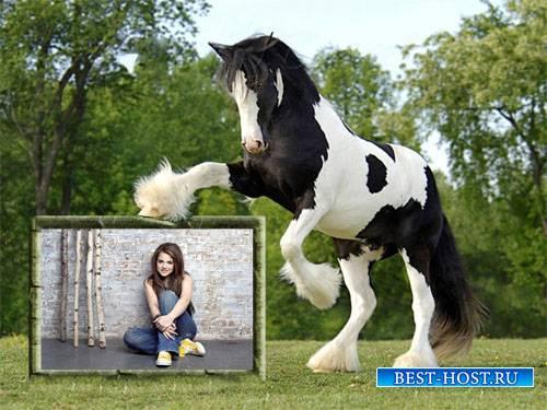 Фоторамка - Красивая черно-белая лошадка и ваше фото