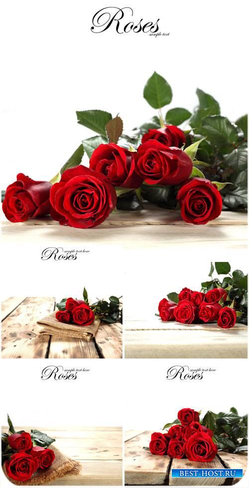 Красные розы, цветы - сток фото