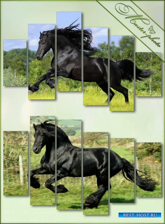 Модульные картинки PSD - Гнедая лошадь