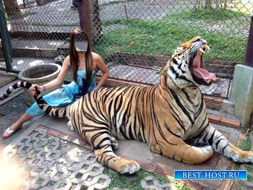 Шаблон для фотошоп - Девушка с тигром