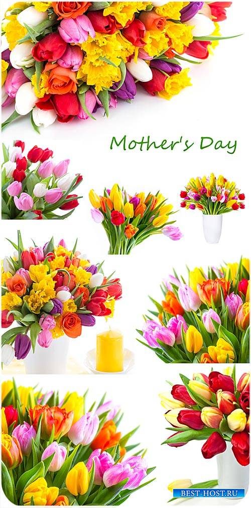 Тюльпаны,  день матери - сток фото