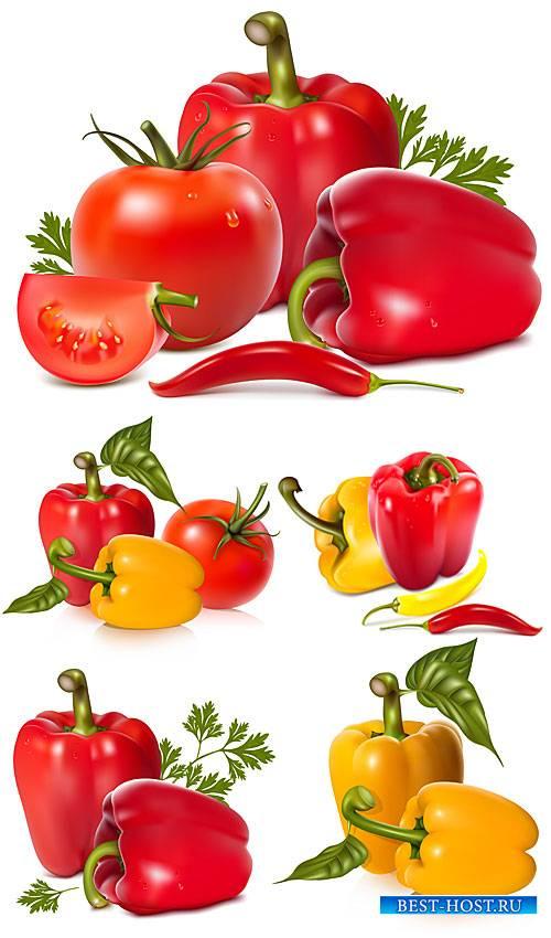 Перец, томаты в векторе