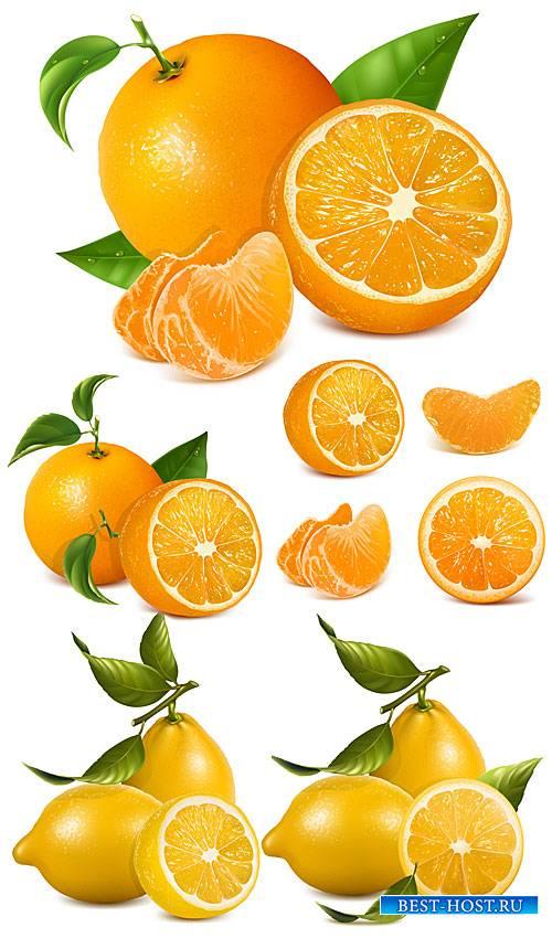 Апельсин, лимон, цитрус в векторе