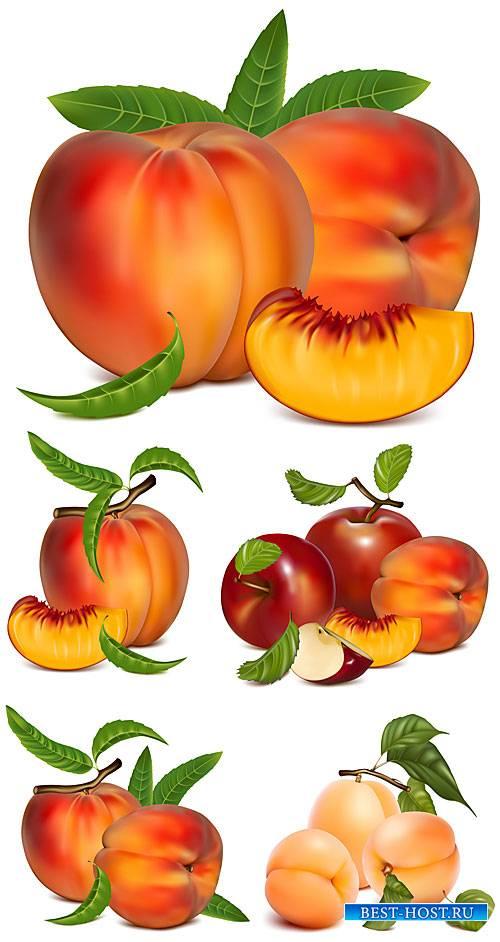 Персики, абрикосы в векторе