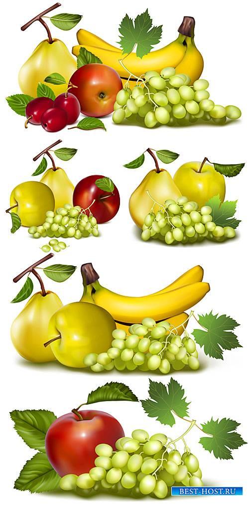 Виноград, бананы, яблоки и груши в векторе