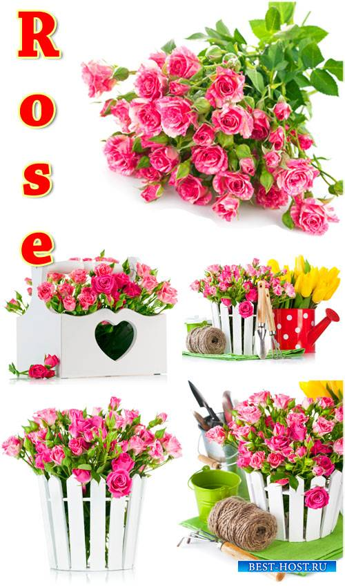 Розы, садовые композиции - сток фото