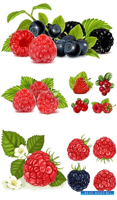 Малина, клубника, черника, ягоды в векторе