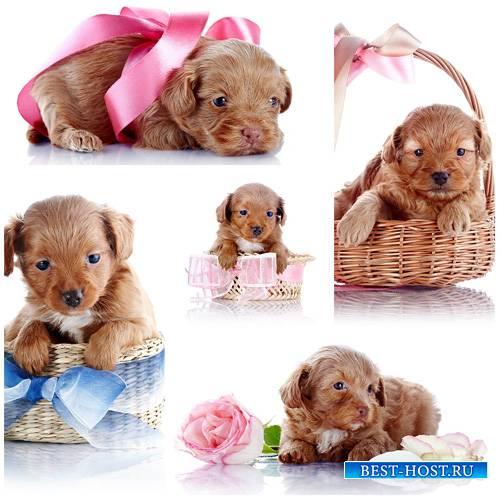 Маленький щенок в корзине - сток фото