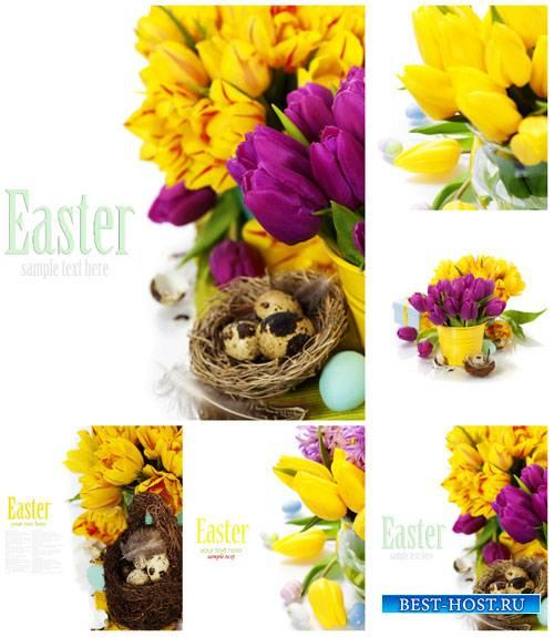 Пасхальные композиции с тюльпанами - сток фото