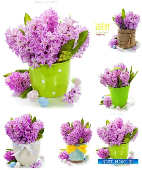 Гиацинт, весенние цветы, пасха - сток фото