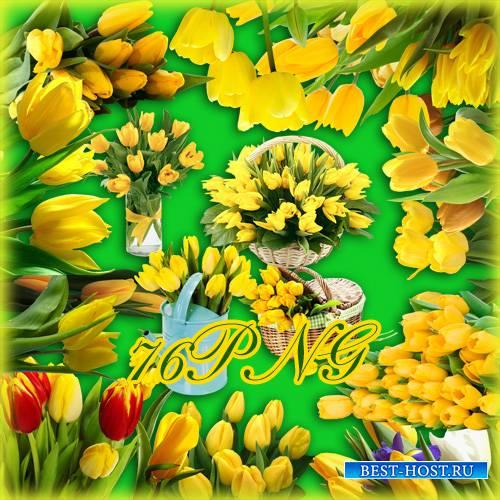 Клипарт - Жёлтые тюльпаны