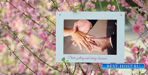 Photo Gallery and Cherry Blossoms - Project for After Effects (Videohive)