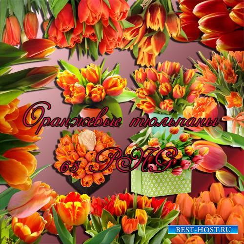 Клипарт - Оранжевые тюльпаны