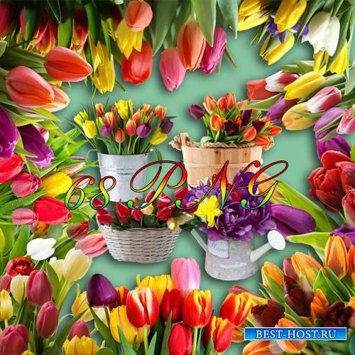 Клипарт - Смесь тюльпанов