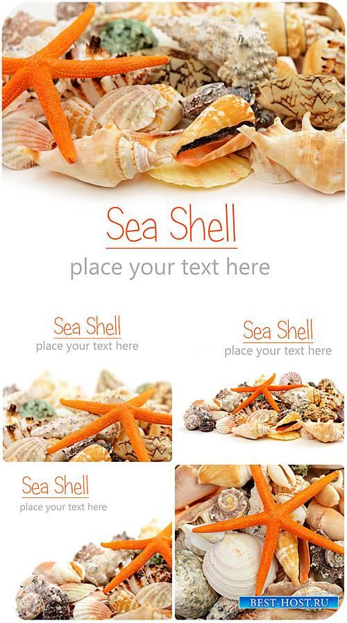 Морские ракушки / Sea shells - Stock photo