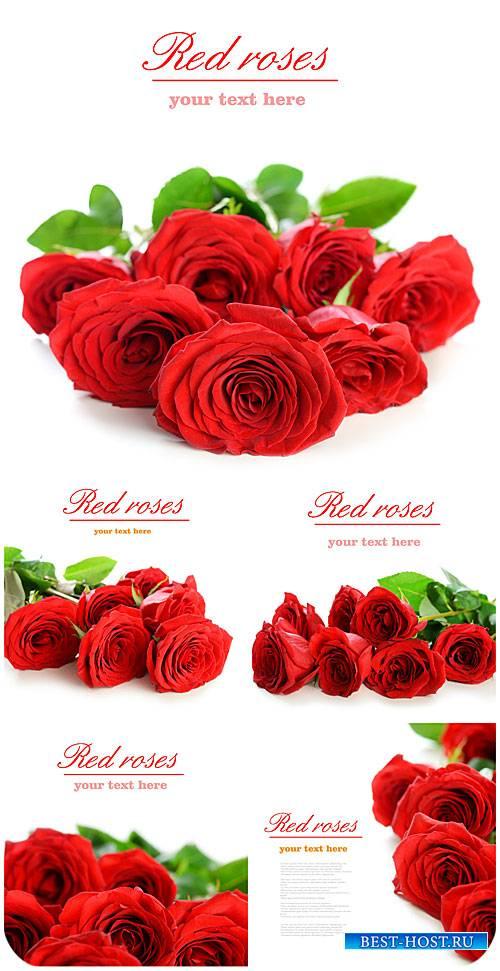 Красные розы, букеты цветов  / Red roses, bouquets of flowers