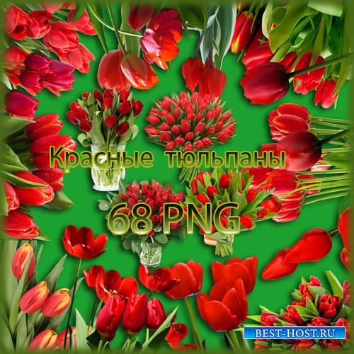 Клипарт - Красные тюльпаны