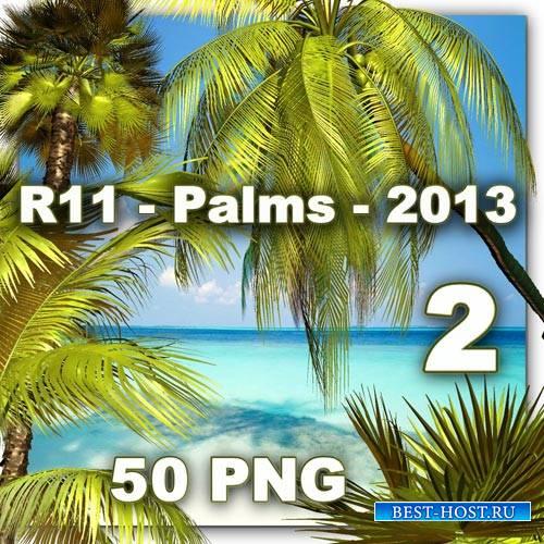 Клипарт PNG - Пальмы 2