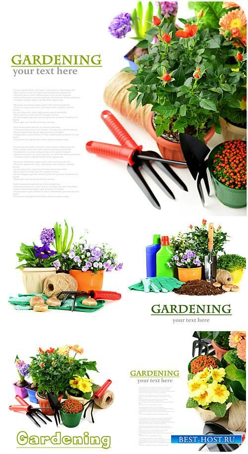 Садоводство и цветоводство / Gardening and Floriculture - stock photos