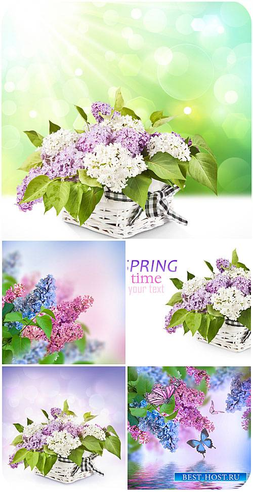 Сирень и бабочки / Lilac and butterfly - Stock photo